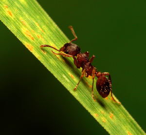 how to stop ants home remedy